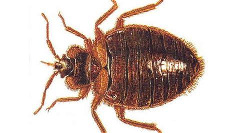 n j burns house trying to kill bed bugs cbs news