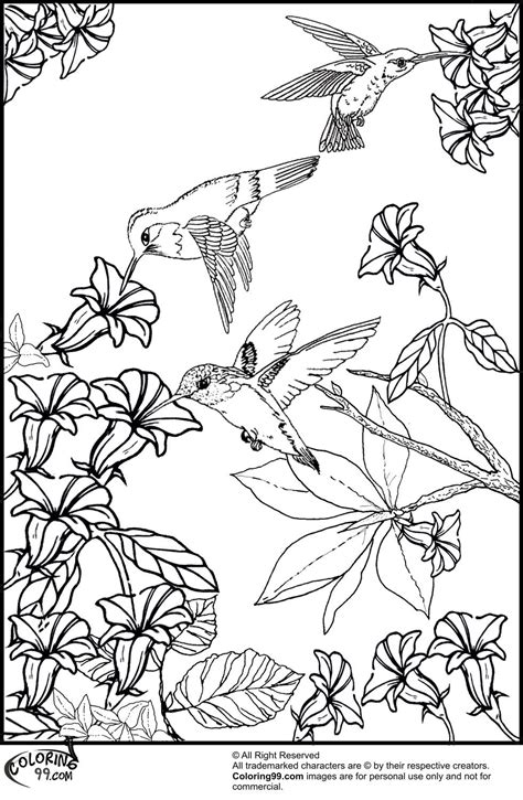 humming bird coloring page coloring home