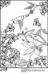 Coloring Pages Hummingbird Printable Bird Hummingbirds Humming Birds Flowers Flower Adult Colouring Adults Sheets Realistic Books Wings Really Sketchite Nature sketch template