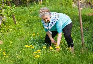 Wann Wächst Rasen : l wenzahn ernten wann ist erntezeit ~ Markanthonyermac.com Haus und Dekorationen