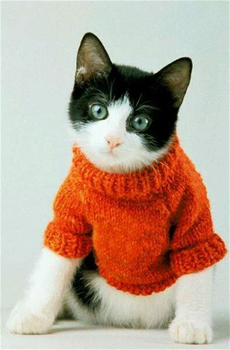 cat sweaters for cats 30 photos of cats in jumpers various hoodies and tops