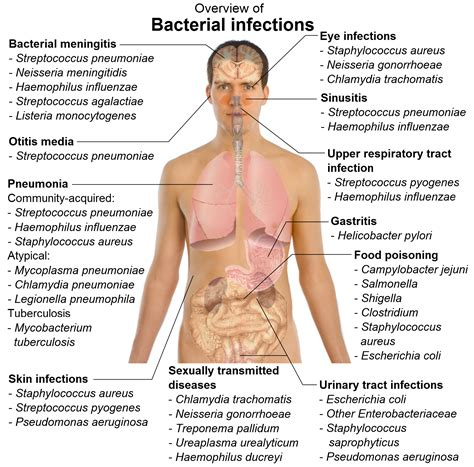 Infection And Incubation Period Meaning Healthhypecom