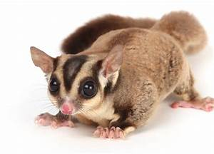 exotic pets | Fuzzy Today