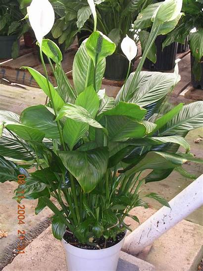 Tropical Plants Plant Names Foliage Flowers Rainforest