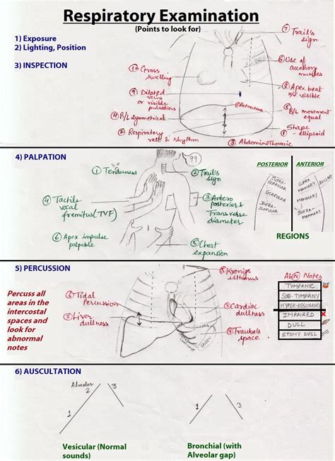 Credit Analysis Sle by Respiratory Examination Wikiwand