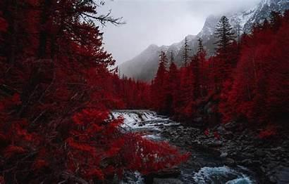 Trees River Fog Landscape Wallpapers Mountains 4k