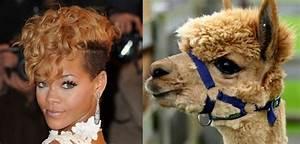 18 Celebrities Who Look Like Animals