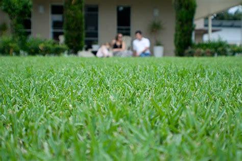 Australia's No. 1 Lawn