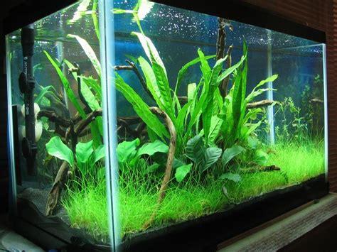 Best 25+ 10 Gallon Fish Tank Ideas On Pinterest  1 Gallon