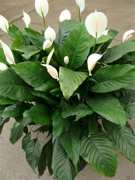 Tropical Foliage Indoor Plants — Fres Hoom
