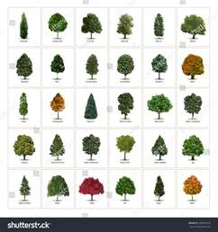 thirty different vector tree illustrations tree stock vector 408099379