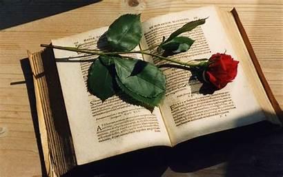 Books Rose Nice Table
