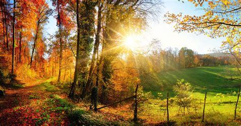 Die 5 schönsten Wälder Deutschlands freundinde