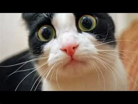 Funny Cats  Best Funny Videos 2015 Youtube