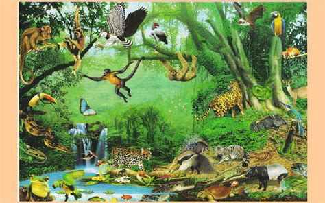 animales de la selva imagenes wallpapers laminas