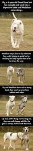 Blind Great Dane and her guide dog // funny pictures ...