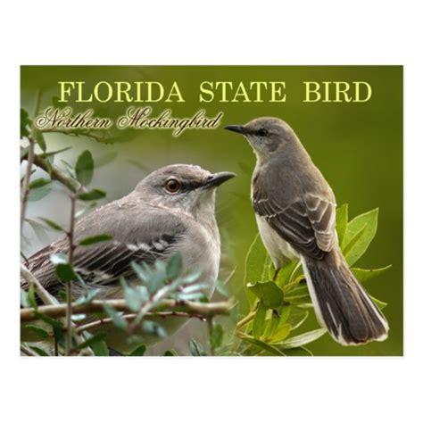 florida state bird mockingbird postcard zazzle com