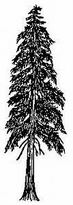 Cedar Tree Silhouette - Cliparts.co | Western Red Cedar ...