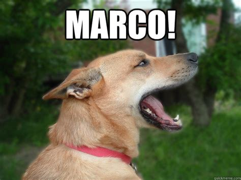 Marco Meme - marco misc quickmeme