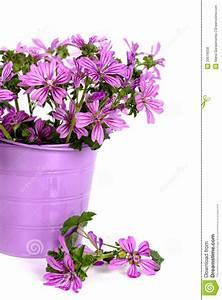 Wild flowers in bucket stock photo. Image of arrangement ...