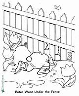 Rabbit Coloring Peter Fence Under Story Tales Fairy Crawls Near Library sketch template