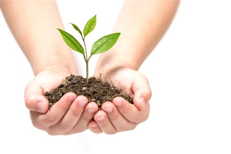 planting a tree plant a tree and help to fight climate change my haliburton now