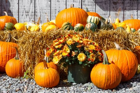 fall harvest display  stock photo public domain pictures