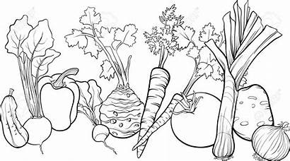 Vegetables Clipart Leafy Vegetable Coloring Clip Pages
