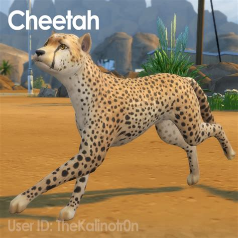 cheetah desert fox jackal red panda lion bear polar