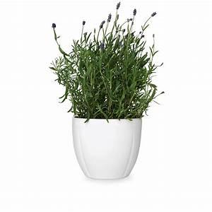 Grand Cru Flowerpot