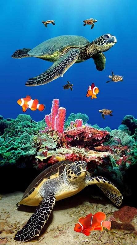 Sea Turtle Wallpapers Free By Zedge