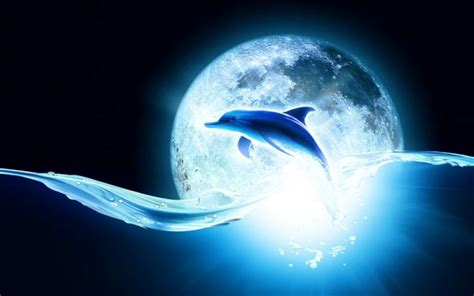 Animated Dolphin Wallpaper - animated dolphin wallpaper hd desktop wallpapers 4k hd