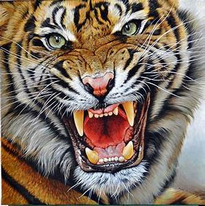 Tiger Roaring Face Pictures to Pin on Pinterest - PinsDaddy