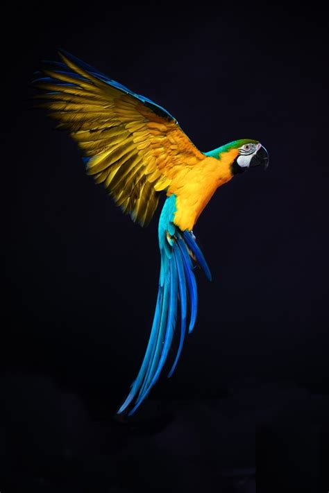 tableau deco chambre adulte tableau perroquet sur plexi ara de guyane multicolore
