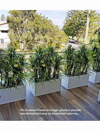 Balcony Privacy Screen Planters Any Commercial