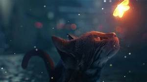 Cat Looking At Glowing Butterfly - Coub