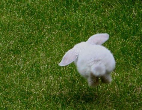 hopping bunny hip hop