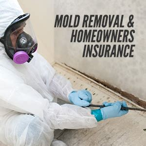 information  mold removal homeowners insurance