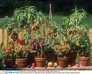 Wassermelone Anbau Balkon : paprikapflanze im topf paprika im topf gartenblog haus und garten paprika im topf ziehen so w ~ Watch28wear.com Haus und Dekorationen