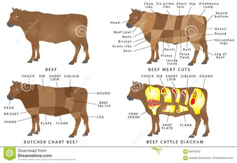beef chart stock vector illustration  loin barbecue