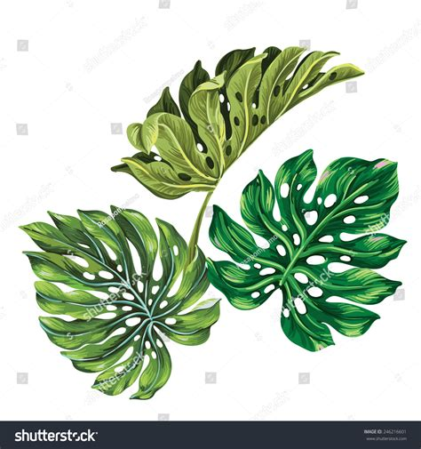 3 Vector Tropical Palm Leaves Realistic Stock Vector