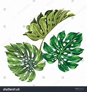 3 Vector Tropical Palm Leaves. Realistic Drawing In ...