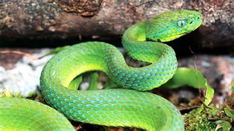 Gorgeous, but Highly Poisonous Snake Species Discovered in ...