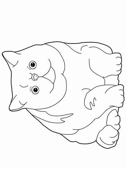 Coloring Pages Exotic Shorthair Persian Cats Cat
