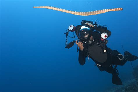 diving  sustainable marine protected area management