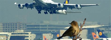 birds  airports   deaf   aggressive