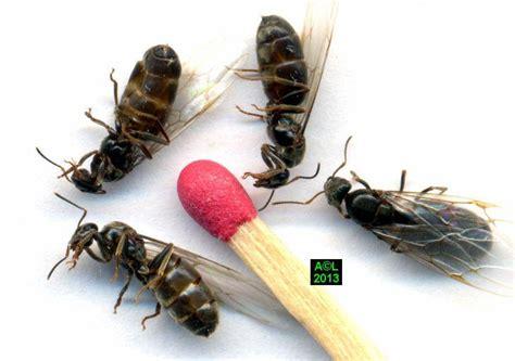 acheter des lanternes volantes ou acheter des lanternes volantes 28 images les termites biologie morphologie d 233 tection