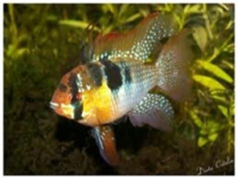 d 233 couvrez notre gamme de poissons d eau douce de l aquarium d anzin