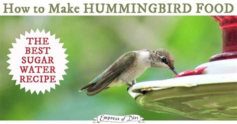 how to make hummingbird food food