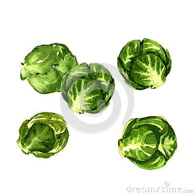 brussels sprouts clipart clipground